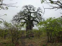 kruger-marjo-12-10-2012-boabab-e-d-026