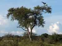 fred-ii-kruger-jan-2011-028