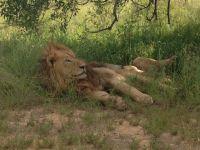 leeuw-fred