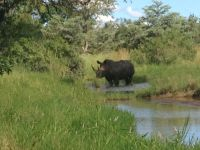 rhino-fred