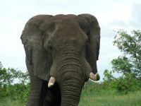 marjo-mopani-eerste-week-2011-083