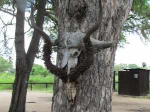 SX30 Kruger 18 jan. 2011 065