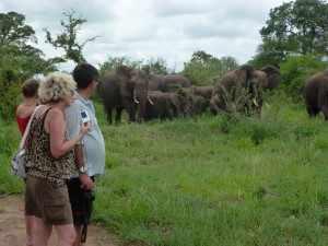 Krugerpark Afrika Wildlife /
