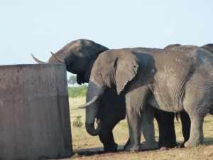 verhoogd aangelegde drinkplaatsen staan her en der in het Krugerpark verspreid, zoals bij Mooiplaas. Marjo Kruger 2012 234