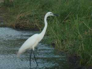 De strandhoudende rivieren met aangrenzende dichte bossen vormen een populair leefgebied voor waterminnende vogels. - Marjo Kruger 2012 504