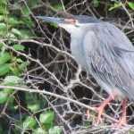 Dé plek voor bird watching in het Krugerpark is een zogenoemde 'hide'. Hiervan zijn er een groot aantal in het park te vinden. Ook Lake Panic hide is speciaal ingericht voor bird watchers. SX30, Kruger 25 jan. 2011 076