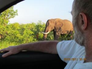 Krugerpark bezoekers - Gedurende die hele maand hebben mijn broer Marjo Hoedemaker en ik in die maand op drie verschillende locaties in het Krugerpark gelogeerd. Kruger-jan.-2011-SX30-I-087-1024x768