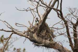 Rechts van de weg zien we een gierennest in de boom. IMG_3055