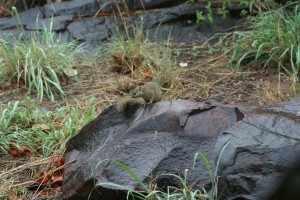 Overdag hangt Knabbelj doodleuk in de tuin van ons huisje in Mopani Krugerpark de heilige onschuld uit, maar 's nachts komt hij in een andere gedaante te voorschijn.IMG_3116