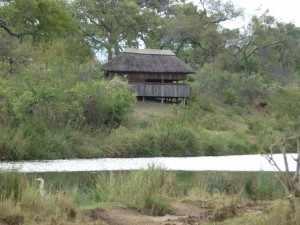 Krugerpark reis 2018 met als thema: Ode aan het Krugerpark