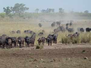 In de enorme ruimte die het wildlife is toegemeten met een totale oppervlakte van ongeveer 20.000 km² krijgen dieren hun leefruimte. P1070060