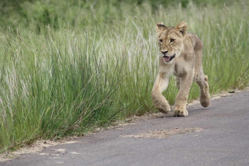 In de enorme ruimte die het wildlife is toegemeten met een totale oppervlakte van ongeveer 20.000 km² krijgen dieren hun leefruimte.