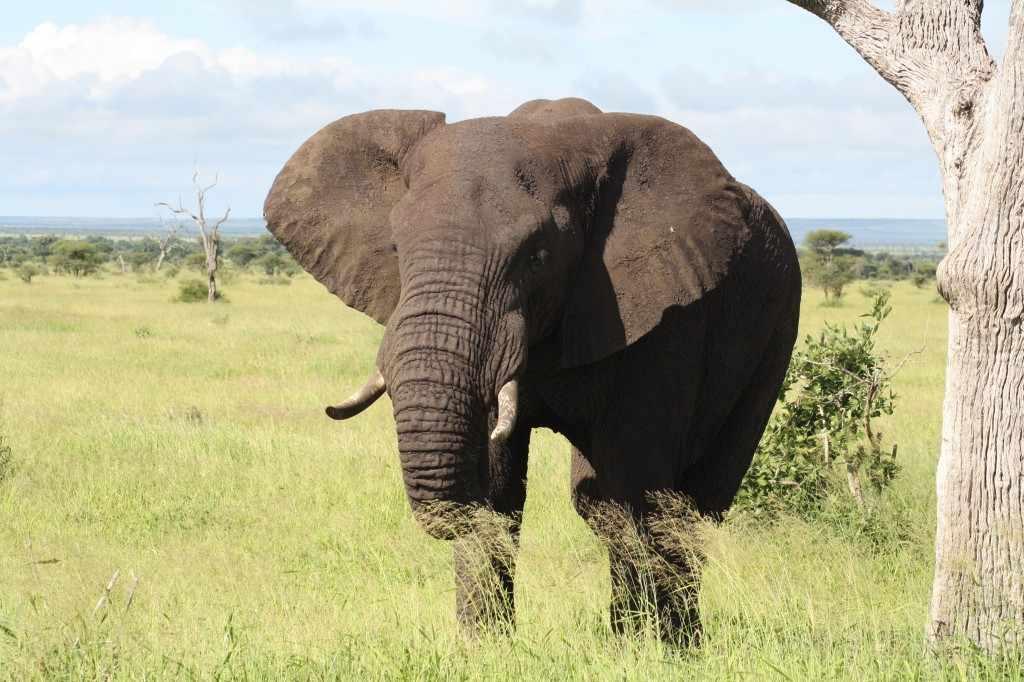 Het navrante hiervan is dat in de zoektocht naar 'snel geld' op korte termijn, de natuur beroofd wordt van haar schatten op de lange duur.