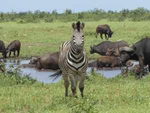 In de enorme ruimte die het wildlife is toegemeten met een totale oppervlakte van ongeveer 20.000 km² krijgen dieren hun leefruimte. Fred Kruger 2012 054