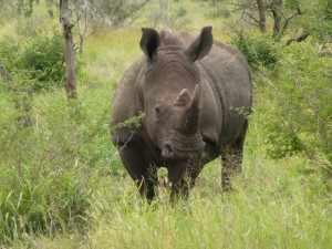 Het navrante hiervan is dat in de zoektocht naar 'snel geld' op korte termijn, de natuur beroofd wordt van haar schatten op de lange duur. Marjo Kruger 2012 418