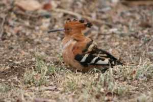 langs Krugerpark gravel roads - hop Kruger - 9 oktober 2012 001