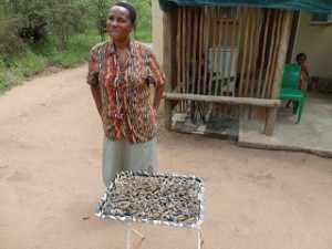 Voor de lokale bewoners zijn Mopani rupsen een gewilde lekkernij, die door jong en oud- wanneer het jaargetijde daar is - als een exquise traktatie verzameld worden en verkocht aan de liefhebber. Mopani rupsen Marjo 121212-110113 153