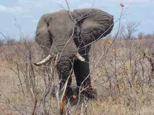 Marjo - Kruger 10,11 oktober 2012 006, de 10.000ste Kruger-site bezoeker op Krugerpark Afrika Wildlife