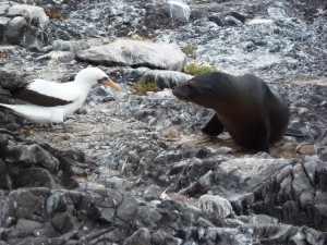 De Galápagos eilanden zijn sinds mensen heugenis en tot op heden een geografisch geïsoleerd gebied gebleven. Het is een kraamkamer van exotische dier- en plantensoorten.P1050491