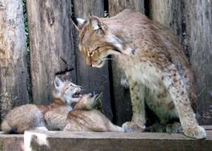 Kaunas Zoo telt ongeveer 270 diersoorten uit verschillende continenten.