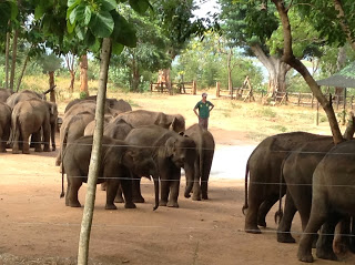 Elephant Transport Home - Udawalawe - Sri Lanka