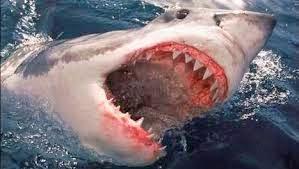 De haai staat overigens wel degelijk in de lijst van de 15 meest gevreesde killers.