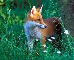 wildlife in Brabant