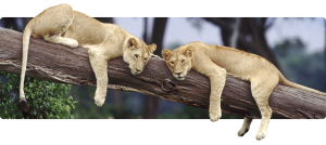 Het Kruger Park - de eerste stappen © Sable Tours