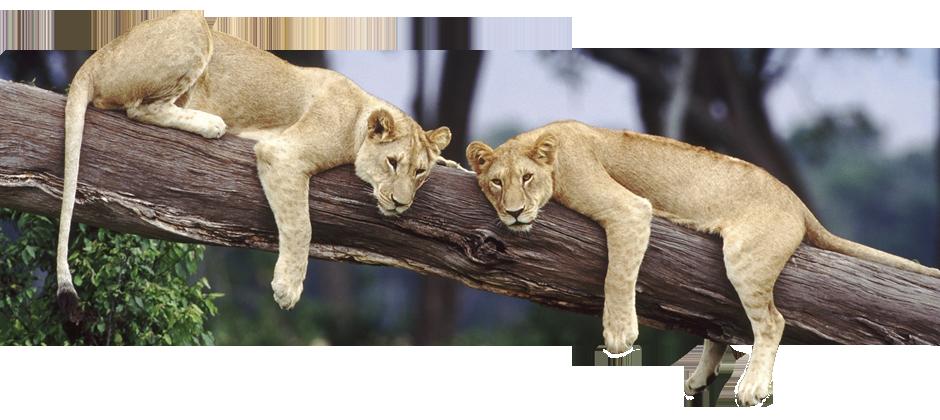 Sable tours - brengt u naar ongeëvenaard Afrika Sable Tours ontleent haar naam aan de elegante Sabelantilope. Pieter en Marcella Sable Tours opgericht.