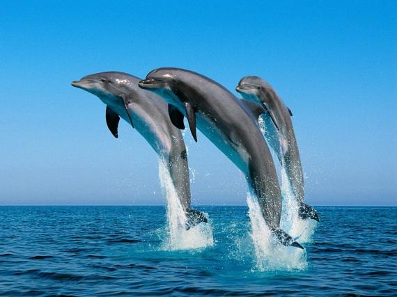 Dolfijnenjacht Dolfijnenjacht Racing Extinction The Cove Dolfijn