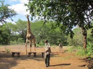Victoria watervallen Zambia Afrika Livingstone Maramba De watervallen werden in 1989 door UNESCO tot werelderfgoed verklaard dit is nu een Nationaal Park