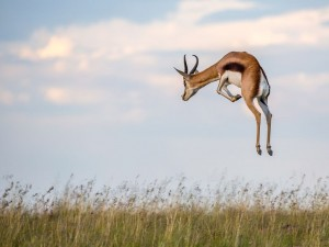 Photograph by Charles Jorgensen, National Geographic Your Shot