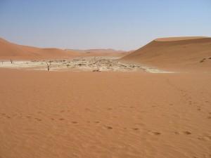 woestijnolifanten in de Namid woestijn zijn mogelijk een ondersoort van de Afrikaanse savanneolifant. Namib - Deadvlei