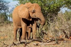 berichten Krugerreservaat van 9 januari 2017