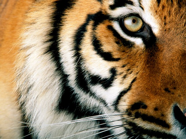 Krugerpark wildlife afrika wilde dierenpark natuur safari krugerpark wildlife afrika wilde - Noordelijke deel ...