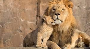 royale dierenliefde
