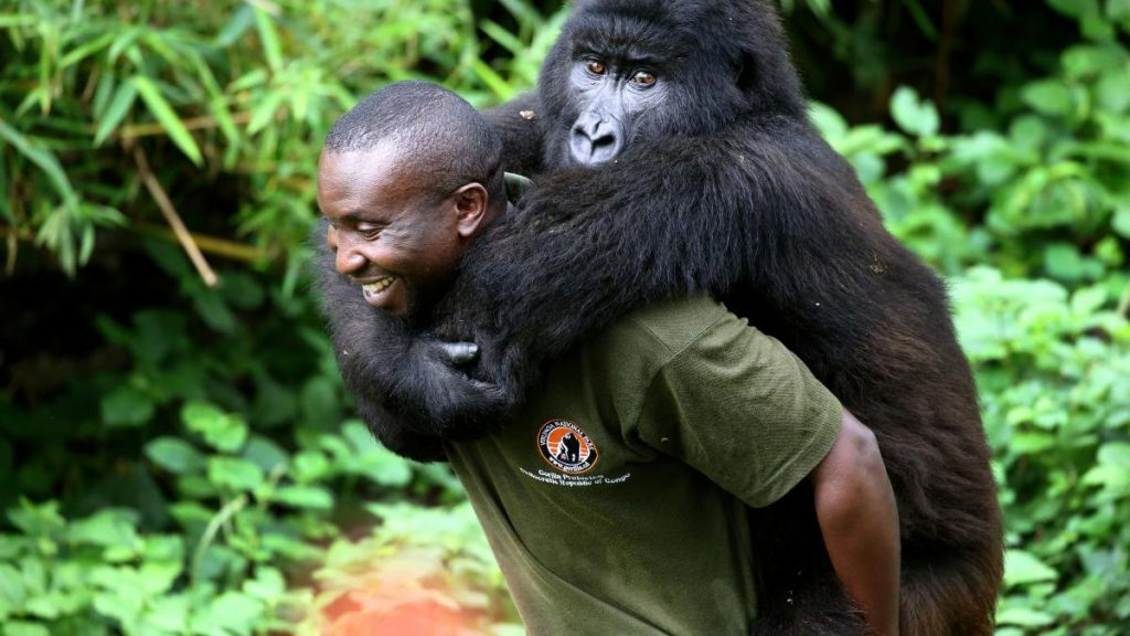 verborgen rijkdommen van Congo, zegen of vloek?
