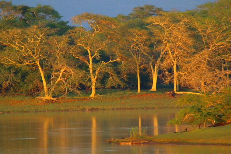 koortsbomen in Ndumo, KwaZulu Natal