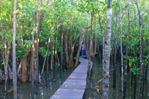 mangrove in Umlalazi KwaZulu Natal