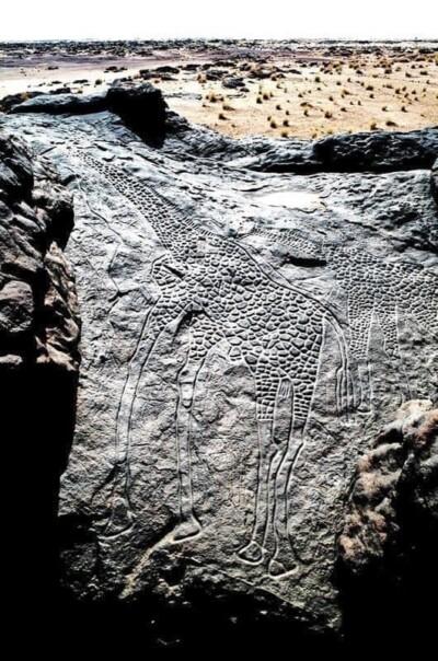 dieren-in-de-kunst op-de-petrogliefen-uit-de-prehistorie-werden-mogelijk-dieren-in-beeld-gebracht-vanwege-een-signaalfunctie