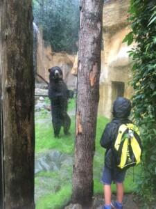 Brilberen in Dierenpark Amersfoort